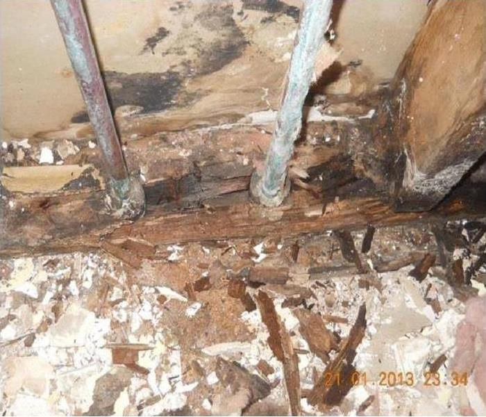 Mold Growth In Independence, Oregon After